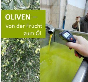 Olivenernte und -verarbeitung auf Kreta – Reisebericht